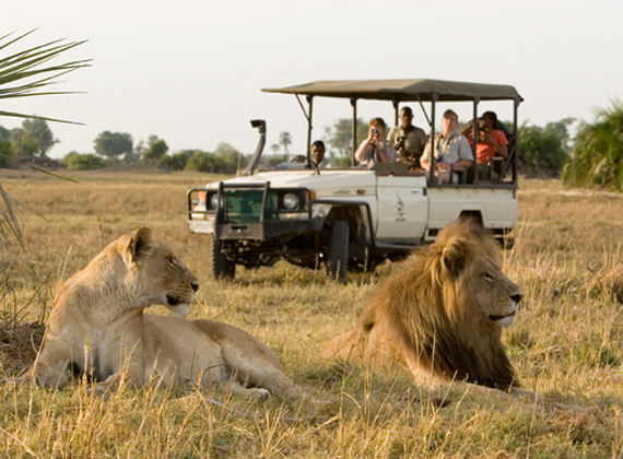 exclusive-safari-tours